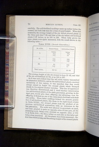 Image of Darwin-F1249-1876-070
