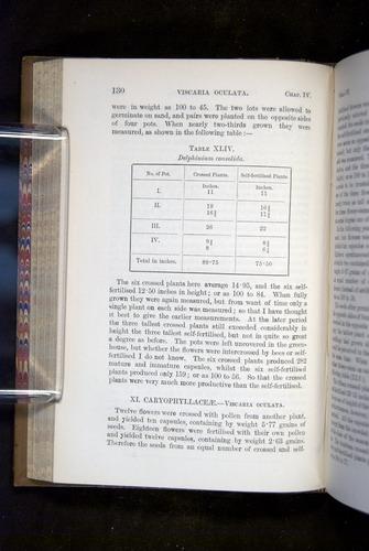 Image of Darwin-F1249-1876-130