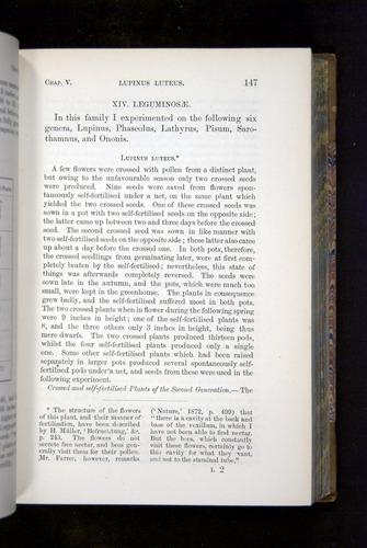 Image of Darwin-F1249-1876-147