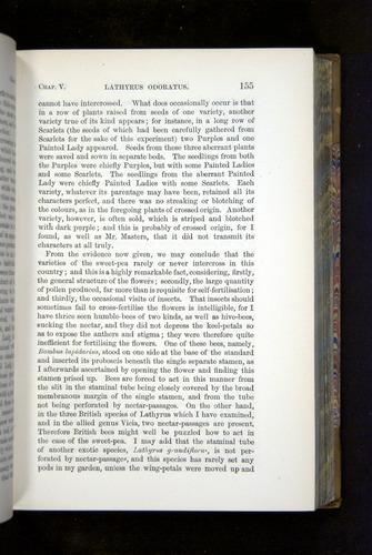 Image of Darwin-F1249-1876-155