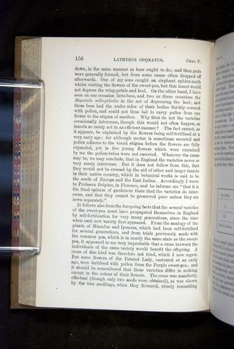 Image of Darwin-F1249-1876-156