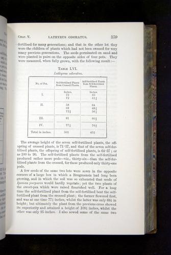 Image of Darwin-F1249-1876-159