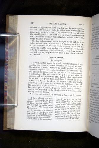 Image of Darwin-F1249-1876-176