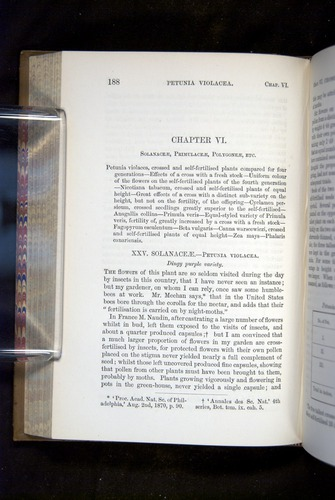 Image of Darwin-F1249-1876-188