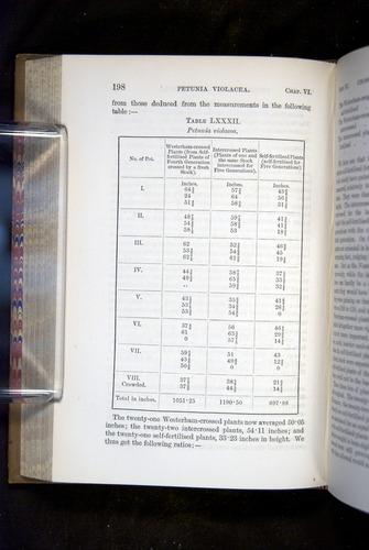 Image of Darwin-F1249-1876-198