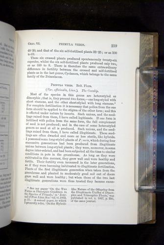Image of Darwin-F1249-1876-219