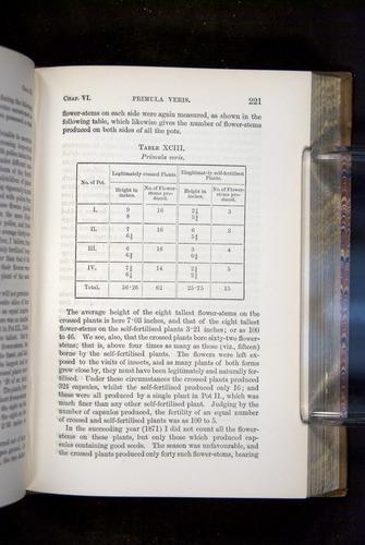Image of Darwin-F1249-1876-221