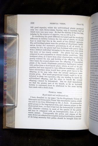 Image of Darwin-F1249-1876-222