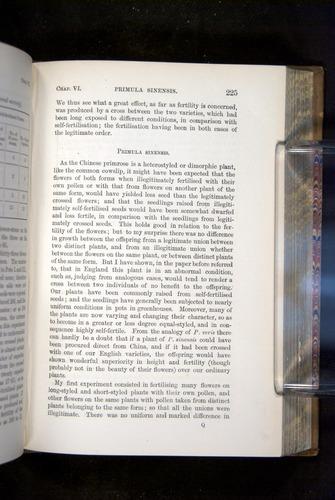 Image of Darwin-F1249-1876-225