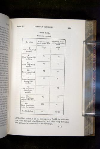 Image of Darwin-F1249-1876-227