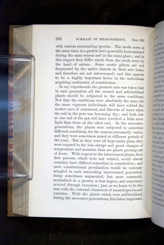 Image of Darwin-F1249-1876-256
