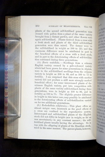 Image of Darwin-F1249-1876-262