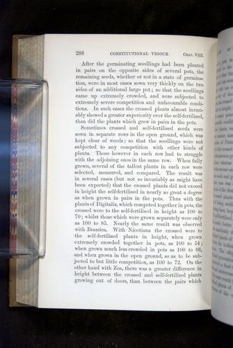 Image of Darwin-F1249-1876-288