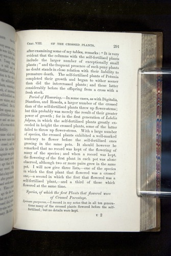 Image of Darwin-F1249-1876-291