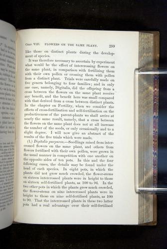 Image of Darwin-F1249-1876-299