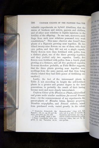Image of Darwin-F1249-1876-306