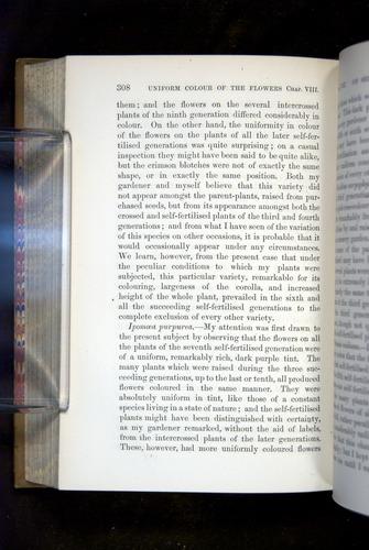 Image of Darwin-F1249-1876-308