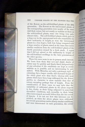 Image of Darwin-F1249-1876-310