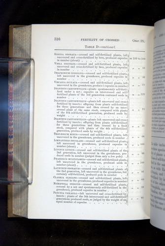 Image of Darwin-F1249-1876-316
