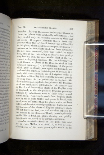 Image of Darwin-F1249-1876-333