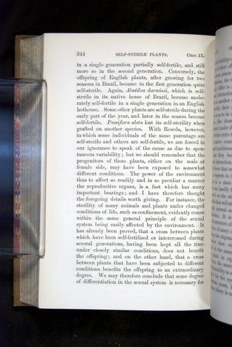 Image of Darwin-F1249-1876-344