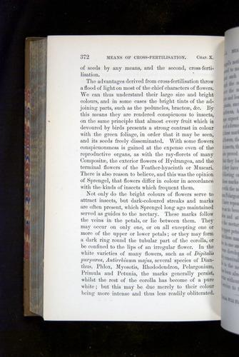 Image of Darwin-F1249-1876-372