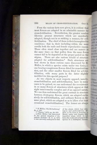 Image of Darwin-F1249-1876-380