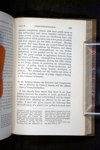 Image of Darwin-F1249-1876-381