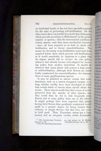 Image of Darwin-F1249-1876-382