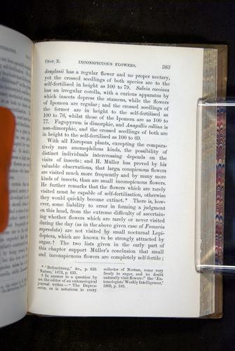 Image of Darwin-F1249-1876-383