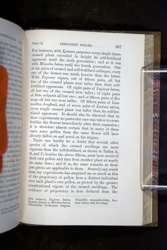 Image of Darwin-F1249-1876-397