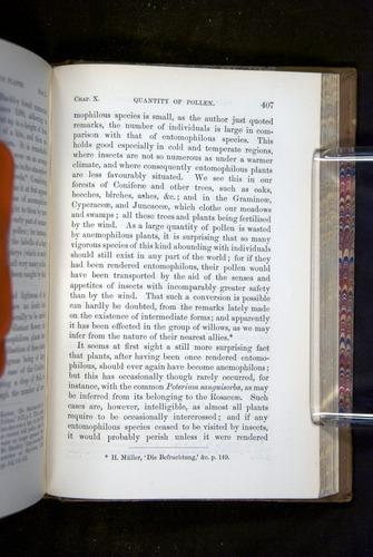 Image of Darwin-F1249-1876-407