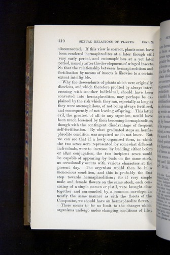 Image of Darwin-F1249-1876-410