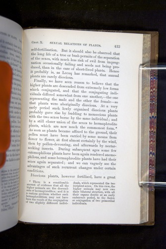 Image of Darwin-F1249-1876-413