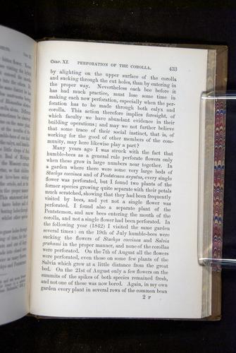 Image of Darwin-F1249-1876-433