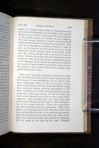 Image of Darwin-F1249-1876-443
