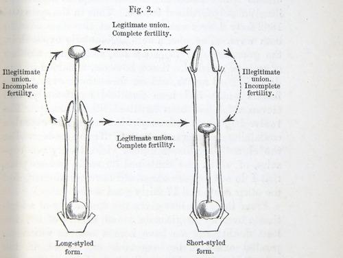 Image of Darwin-F1277-1877-zzzz-det-027