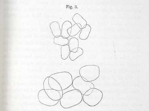 Image of Darwin-F1277-1877-zzzz-det-035
