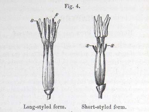 Image of Darwin-F1277-1877-zzzz-det-082