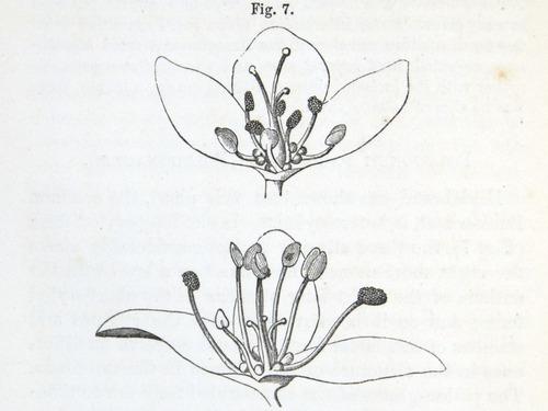 Image of Darwin-F1277-1877-zzzz-det-112