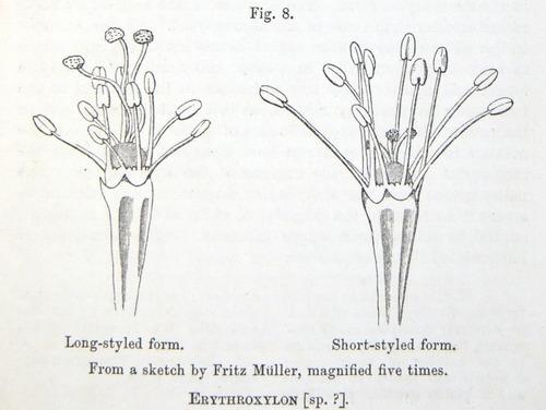 Image of Darwin-F1277-1877-zzzz-det-121
