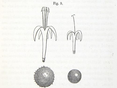 Image of Darwin-F1277-1877-zzzz-det-129