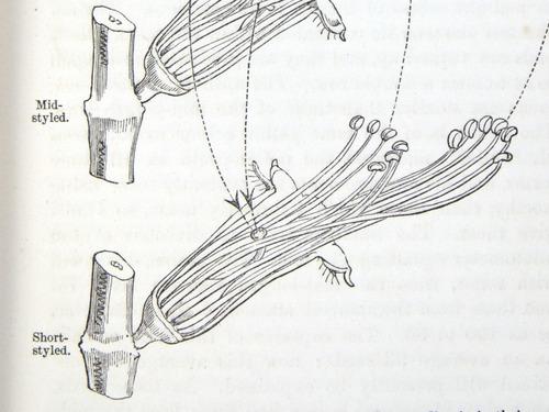 Image of Darwin-F1277-1877-zzzz-det-139-2