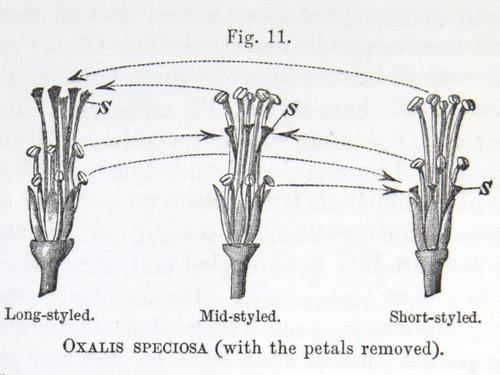 Image of Darwin-F1277-1877-zzzz-det-170