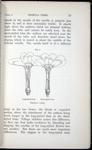 Image of Darwin-F1277-1877-015