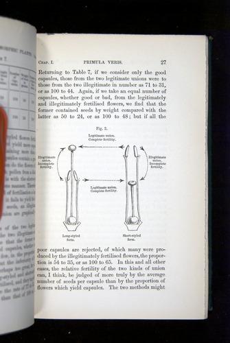 Image of Darwin-F1277-1877-027