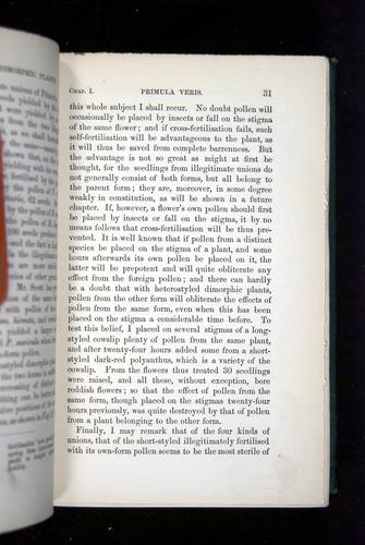 Image of Darwin-F1277-1877-031