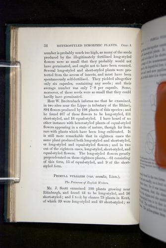 Image of Darwin-F1277-1877-034