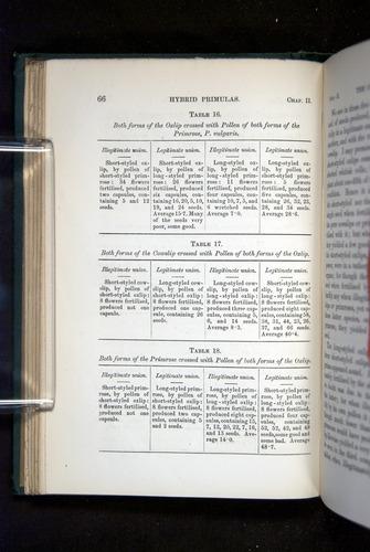 Image of Darwin-F1277-1877-066