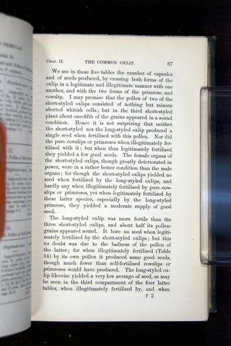 Image of Darwin-F1277-1877-067